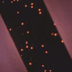 Fil avec microsphères luminescentes, visible sous lecteur dédié