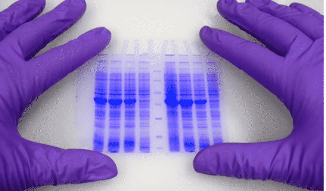 Surface active film enduit bandelettes analyse formulation enduction héliogravure Rexor